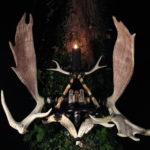 Moose Antler Altar
